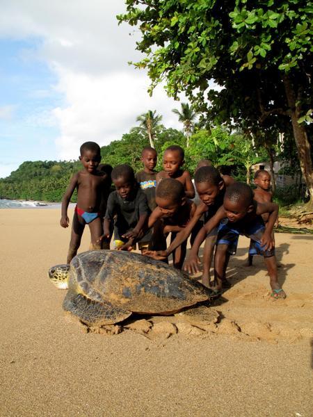 Roheline merikilpkonn ja lapsed (Principe saarel)